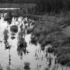 De Peelvenen natuurherstel